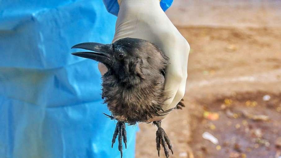 Bird Flu- India TV Hindi