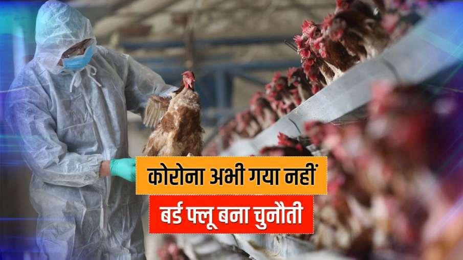 Around 500 poultry birds found dead amid bird flu scare in Himachal Pradesh latest news- India TV Hindi