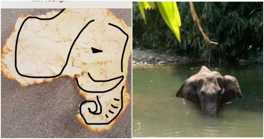 elephant- India TV Hindi