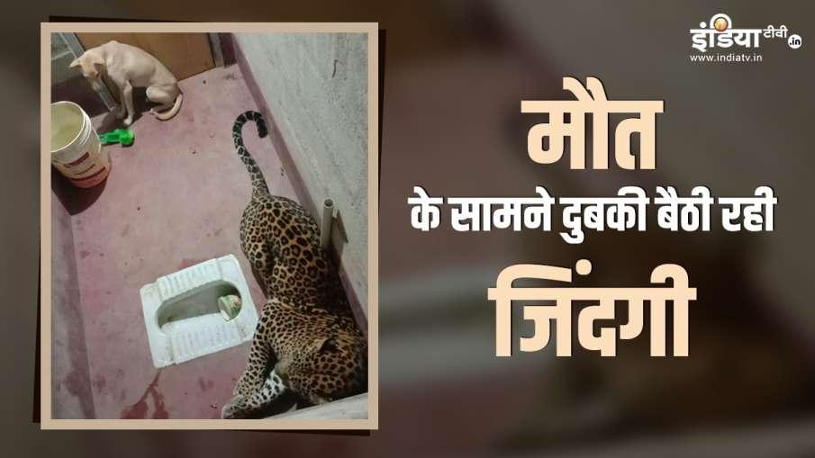 leopard with dog- India TV Hindi