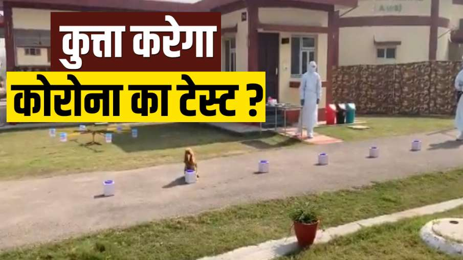 Army Dogs Train to Sniff Out Coronavirus- India TV Hindi