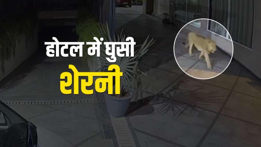 होटल में शेरनी- India TV Hindi