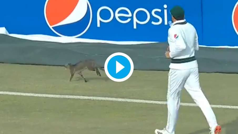 Pakistan Player Chasing Cat During Match- India TV Hindi