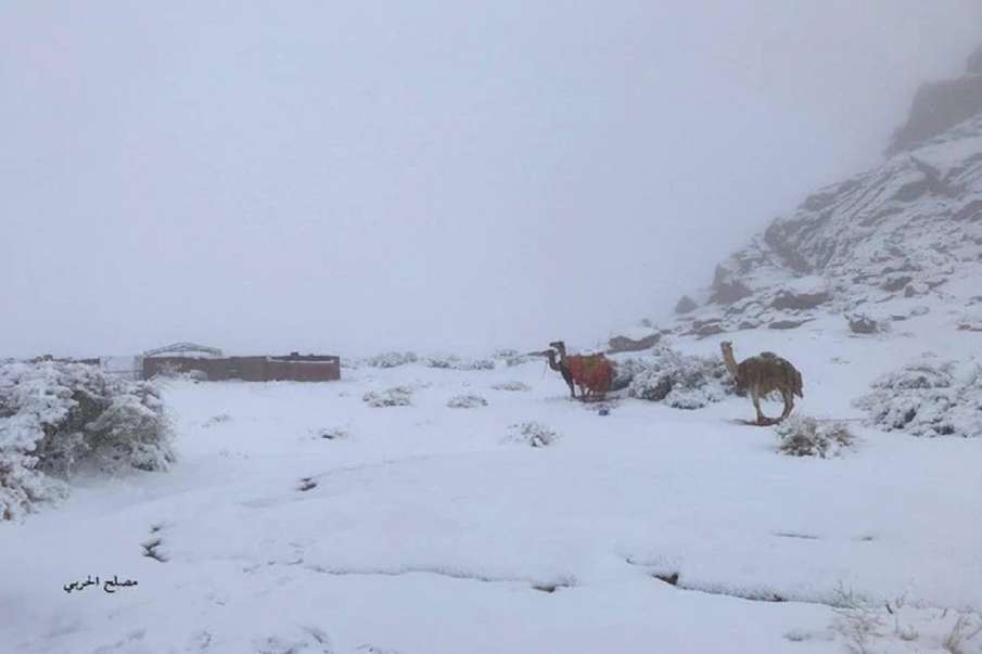 Heavy snowfall in Saudi Arabia for first time in 50-years weather latest news- India TV Hindi