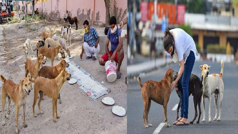 Dispute over feeding dogs court asks AWBI to interfere कुत्तों को खाना खिलाने पर विवाद, अदालत ने AWB- India TV Hindi