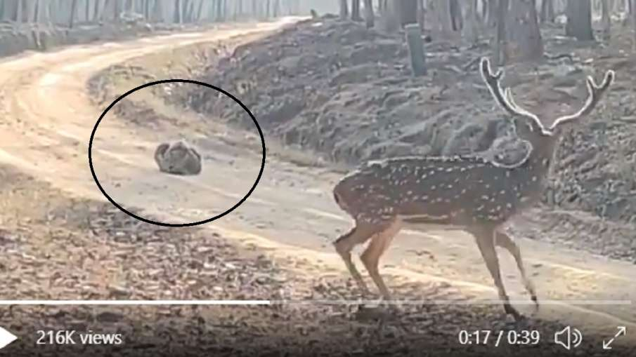 Hunting fails- India TV Hindi