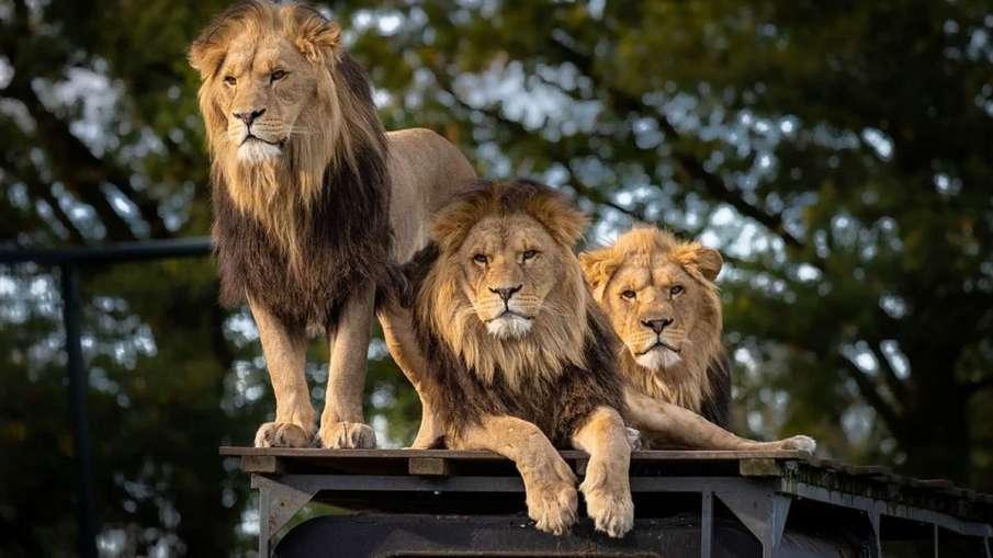 Reliance Zoo, Reliance Zoo Gujarat, Reliance Zoo Jamnagar, Reliance Jamnagar, Jamnagar Zoo- India TV Hindi