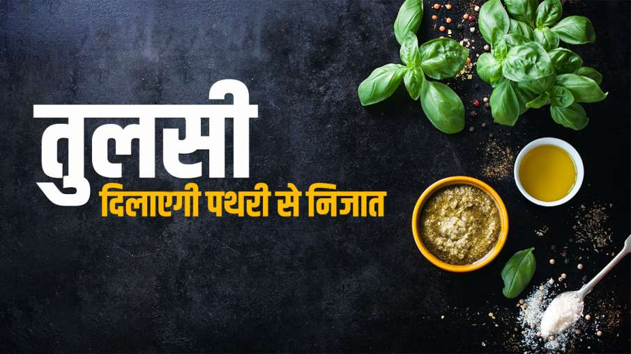 Kidney Stone: पथरी से राहत दिलाएगी तुलसी, ऐसे सेवन करके पाएं किडनी स्टोन से छुटकारा- India TV Hindi