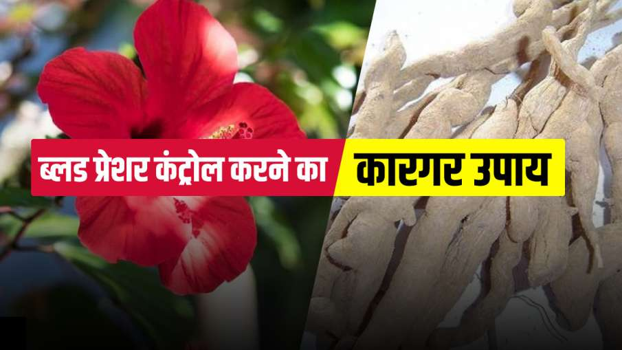 how to control high or low blood pressure naturally at home immediately - India TV Hindi