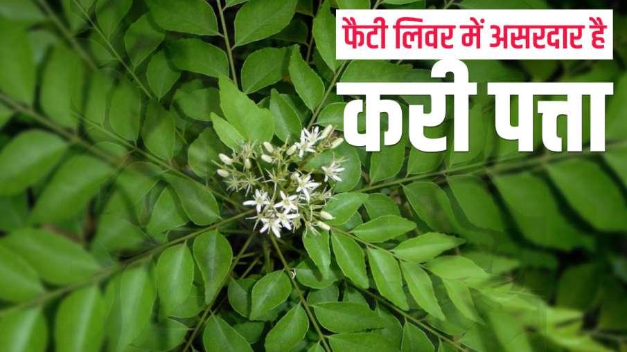 curry leaves- India TV Hindi