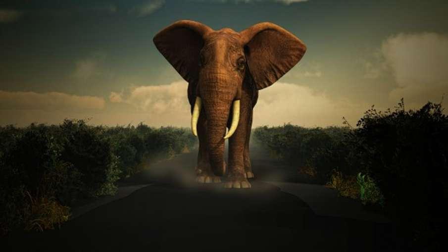 Vastu Tips: घर पर इस तरह रखें हाथी की मूर्तियां, सुख-समृद्धि के दांपत्य जीवन में बढ़ेगा प्यार- India TV Hindi