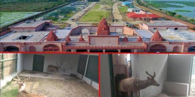 3.19 lakh children of primary will visit Gorakhpur Zoo...- India TV Hindi