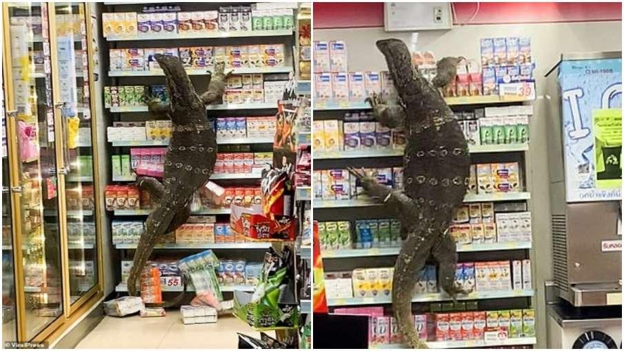 monitor lizard in mall- India TV Hindi
