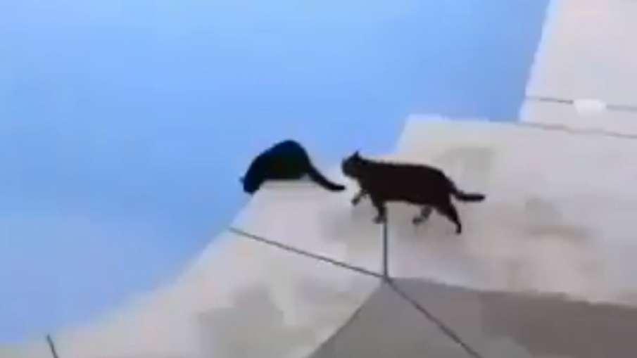 naughty cat video- India TV Hindi
