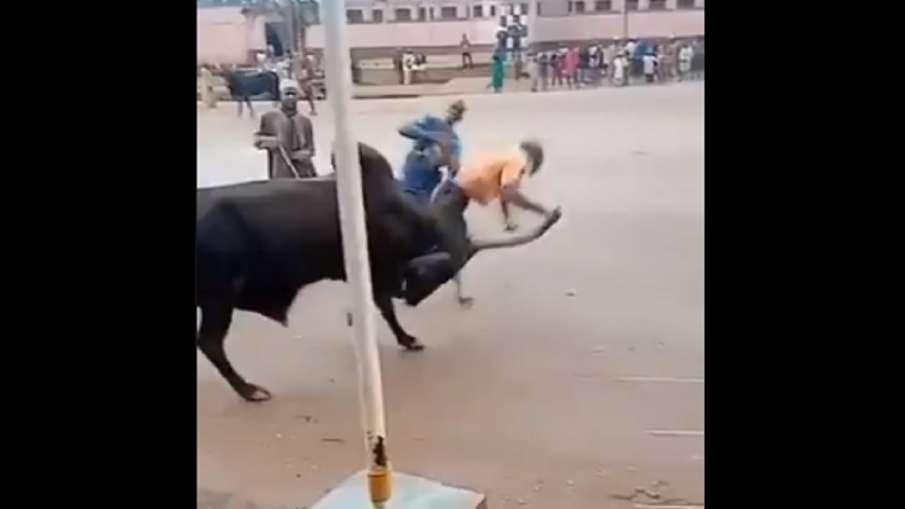 bull ride- India TV Hindi
