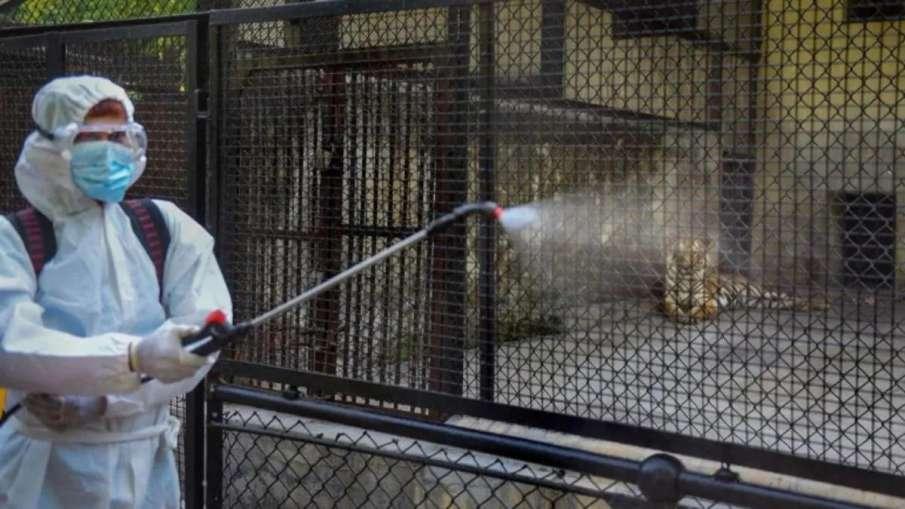 Coronavirus does not spread through animals, only through human to human transmission: Govt- India TV Hindi