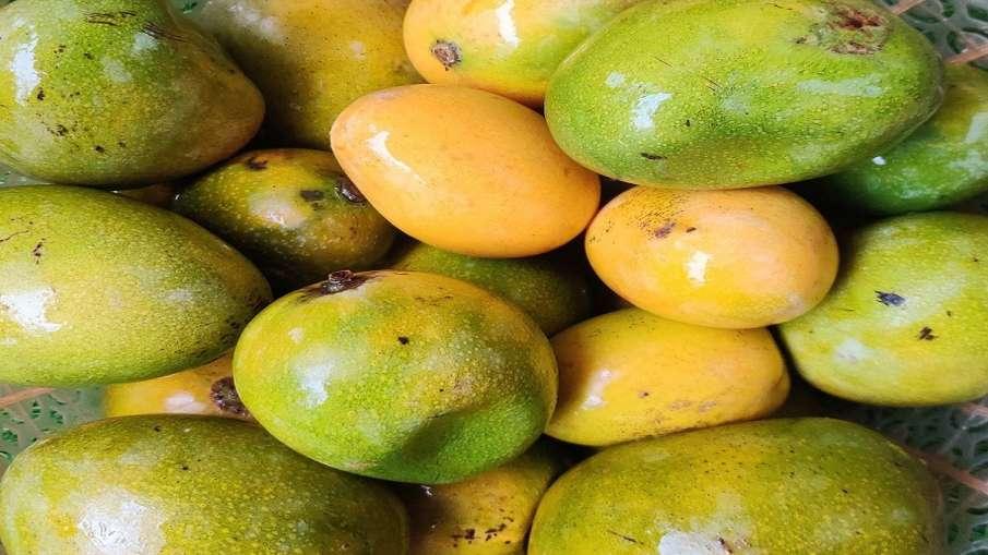 cannabis hidden in mango truck DRI Indore arrests three आम की आड़ में ले जाया जा रहा था 3000 किलो गा- India TV Hindi
