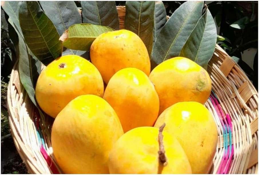 Mango or Aam- India TV Hindi