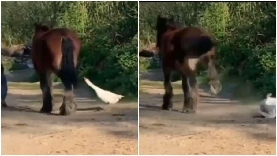 horse kick- India TV Hindi
