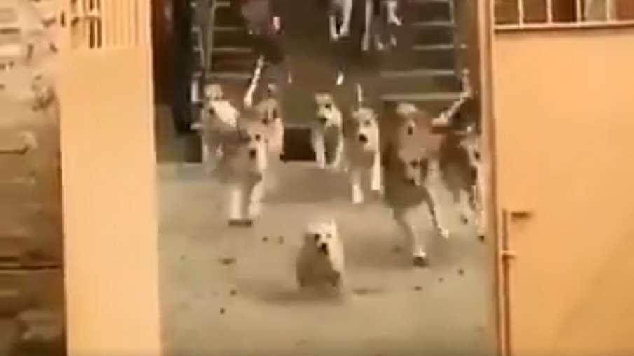 cute puppy video- India TV Hindi