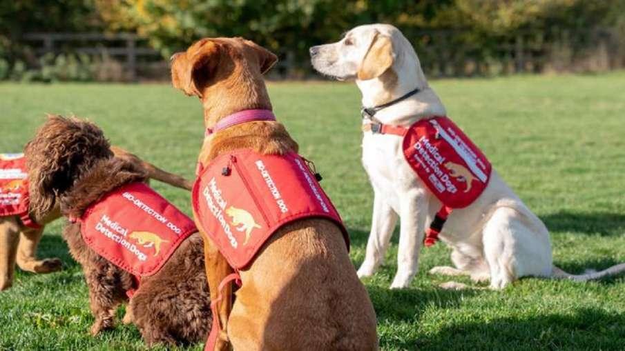 सूंघ कर कोविड-19 के संक्रमण का पता लगा सकते हैं प्रशिक्षित कुत्ते, ब्रिटिश अध्ययन में हुआ खुलासा- India TV Hindi