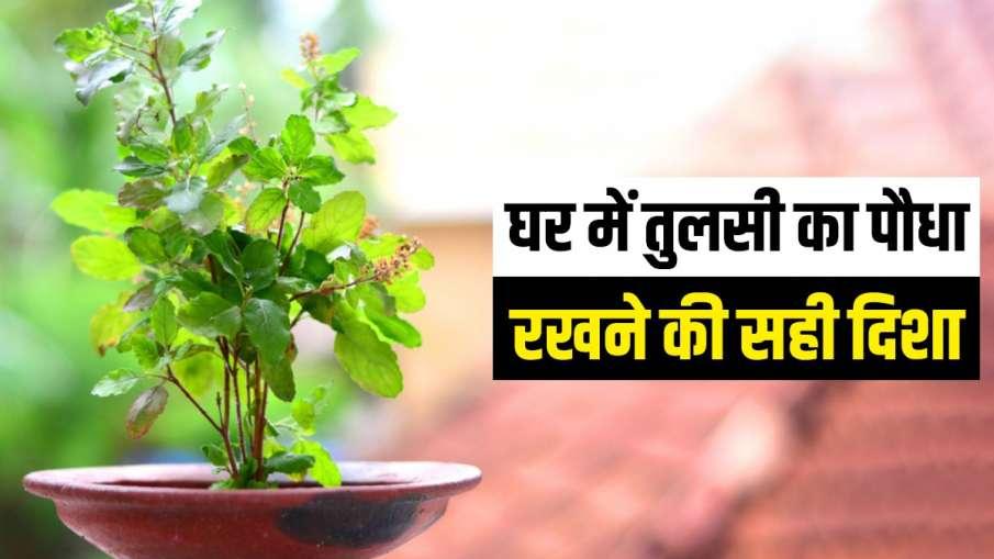 Vastu Tips: हर मुसीबत का संकेत देती हैं तुलसी, घर पर लगाने से पहले जरूर जान लें कुछ बातें- India TV Hindi