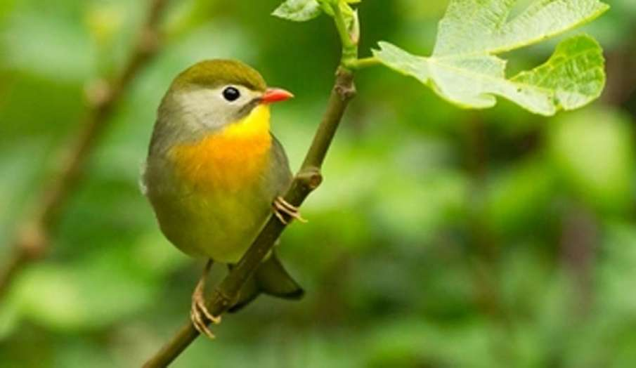 Vastu Tips: घर की इस दिशा में लगाएं पक्षी की तस्वीर, बनने लगेंगे सफलता के योग- India TV Hindi