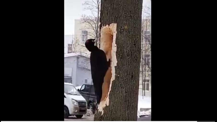 Woodpecker- India TV Hindi