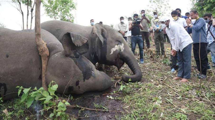 18 wild elephants killed in Assam due to lightning, confirms post-mortem exam- India TV Hindi