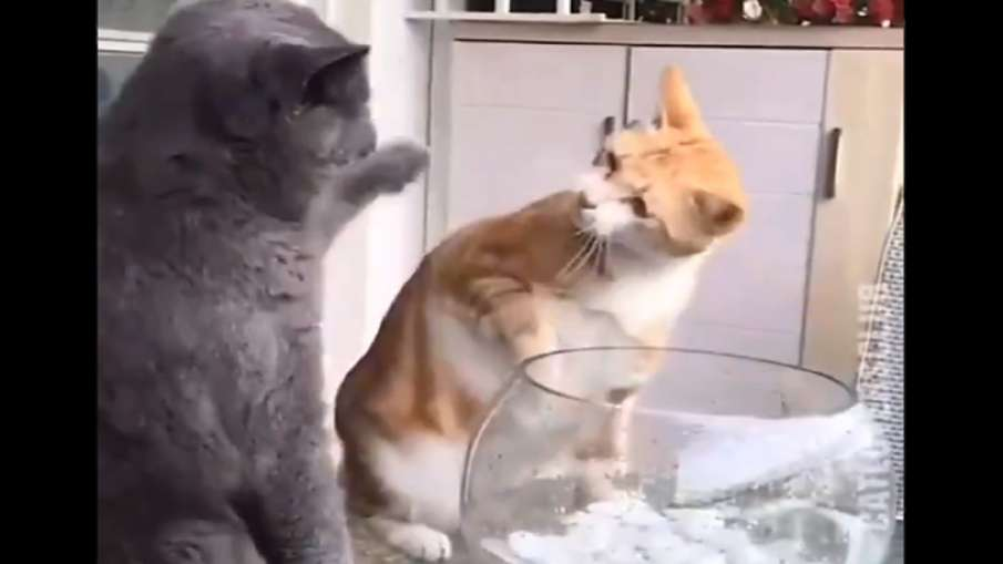 cat slapped friend- India TV Hindi