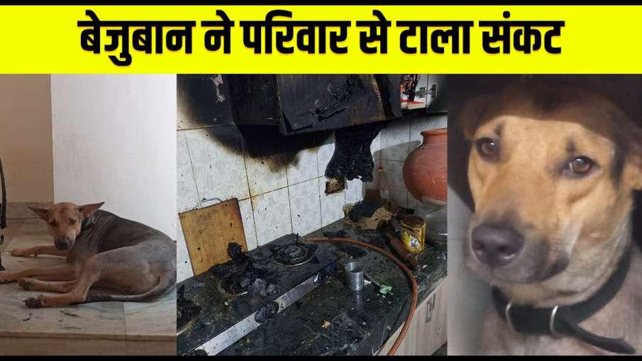pet dog raises alarm saves family from fire in greater noida अच्छा करने वालों के साथ अच्छा ही होता ह- India TV Hindi