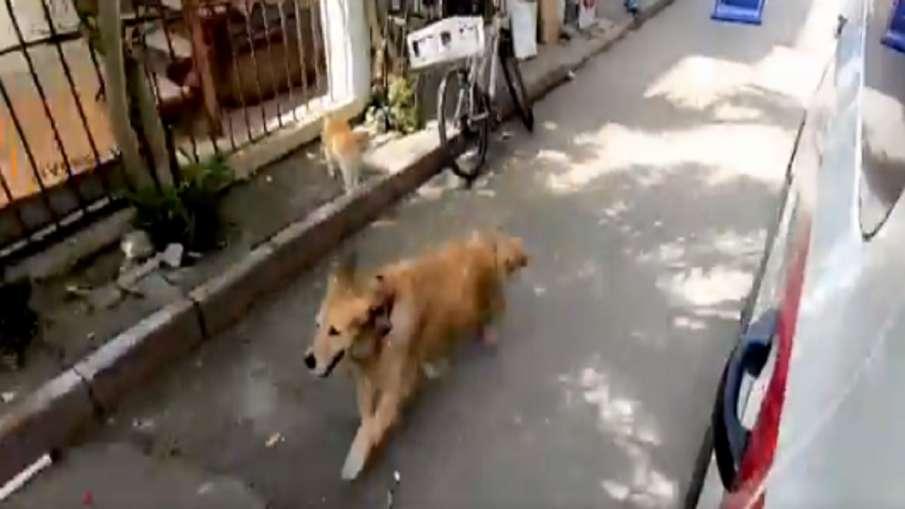 dog video- India TV Hindi