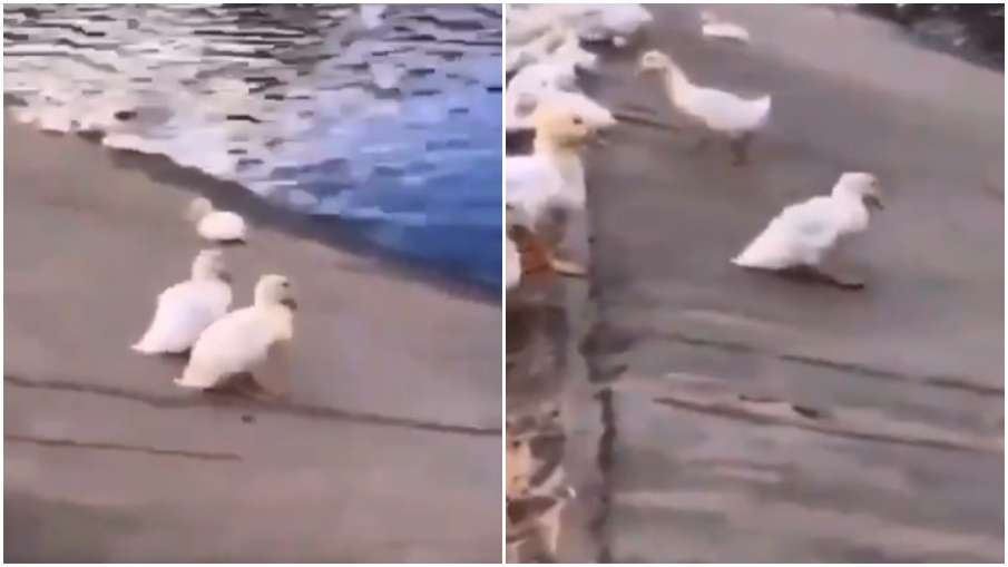 duck party- India TV Hindi