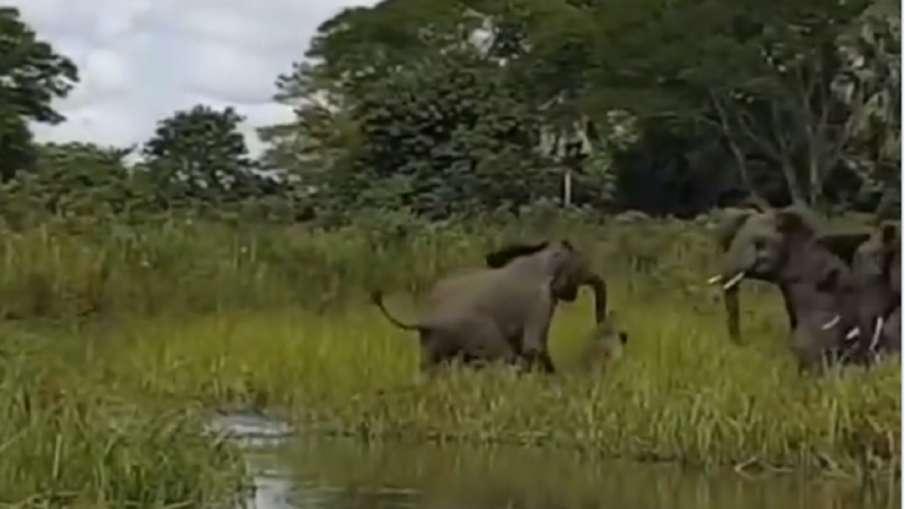elephant video- India TV Hindi