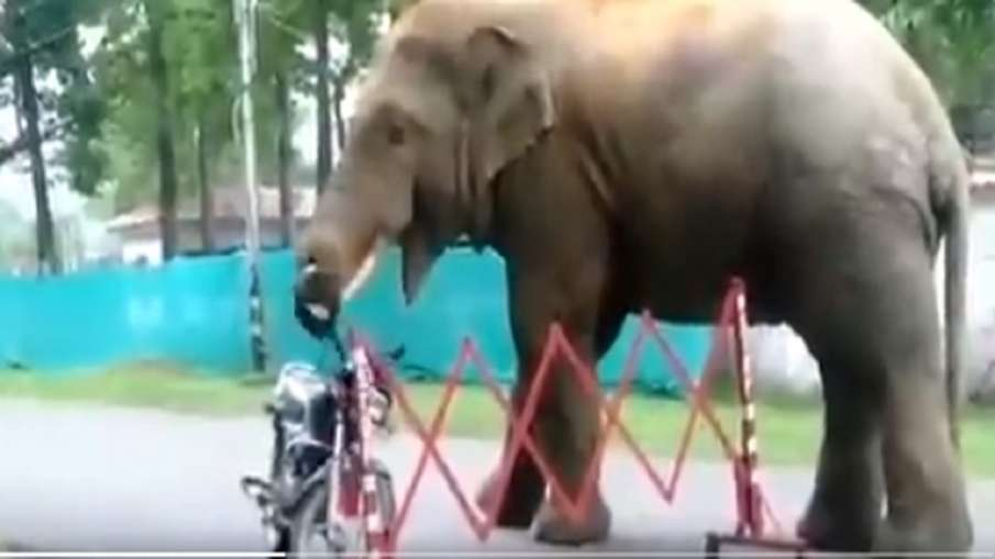 elephant eat helmet- India TV Hindi