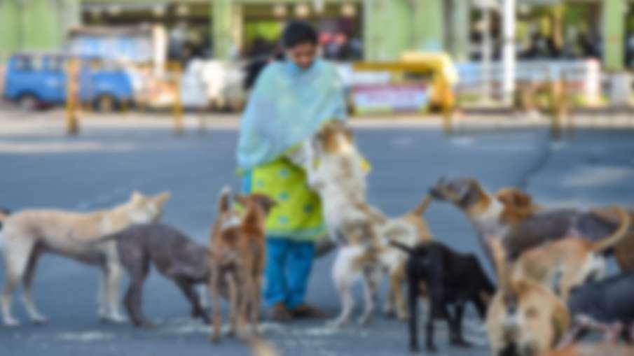 neighbour dog bites woman her husband shots dog पड़ोसी के कुत्ते ने महिला को काटा, महिला के पति ने कु- India TV Hindi