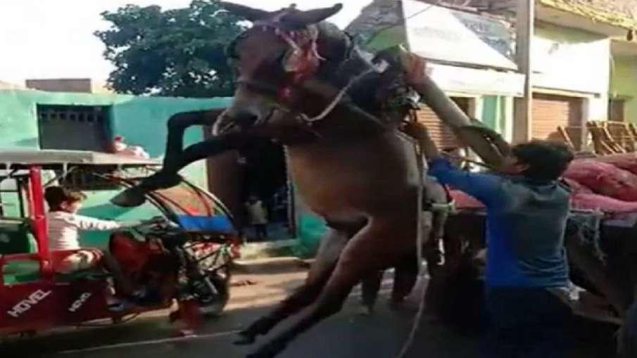 overload horse- India TV Hindi