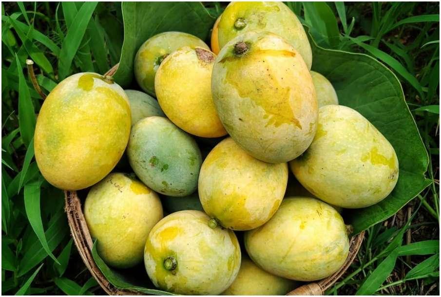 Mangoes- India TV Hindi