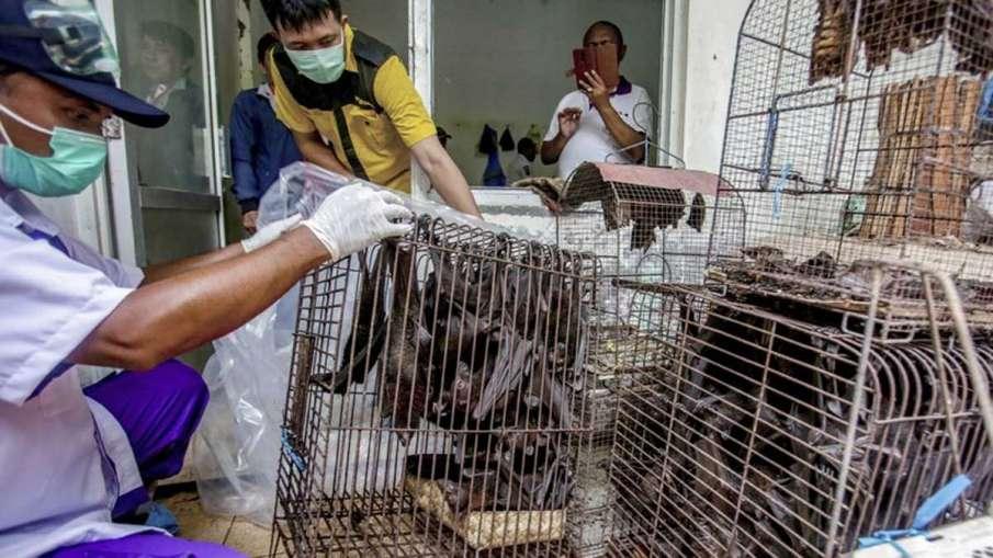 Wuhan Coronavirus, Wuhan Market Animals, Wuhan Covid-19, Wuhan Coronavirus Study- India TV Hindi