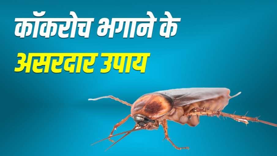कॉकरोच को घर से भगाने के घरेलू उपाय, यूं हो जाएंगे रफूचक्कर- India TV Hindi