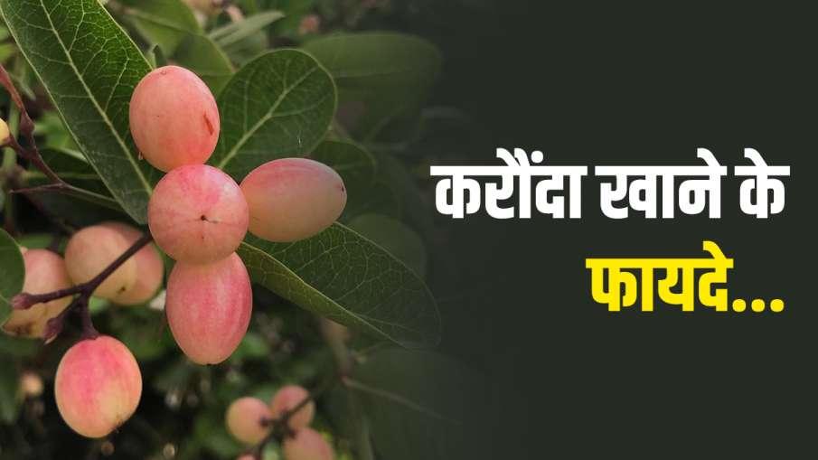 health benefits of karaunda - India TV Hindi