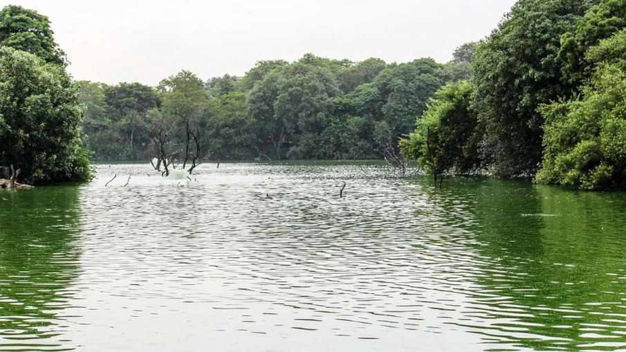 Bihar Woman Kills Daughters, Bihar Woman Daughters Pond, Bihar Daughters Pond Dead- India TV Hindi