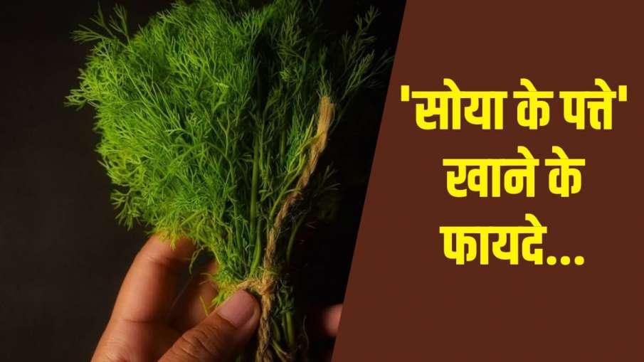 soya leaves - India TV Hindi