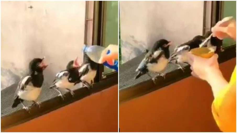 women feeding birds - India TV Hindi