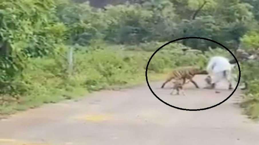 Hyena attack- India TV Hindi