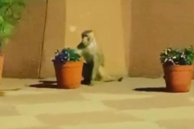 बंदरों से बचने के लिए...- India TV Hindi