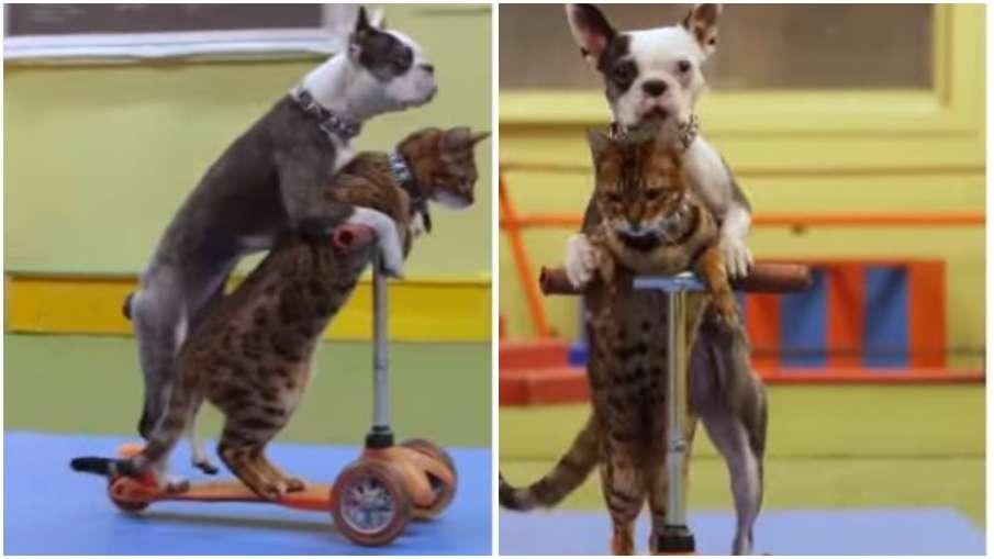 कुत्ते और बिल्ली का मजेदार वीडियो- India TV Hindi