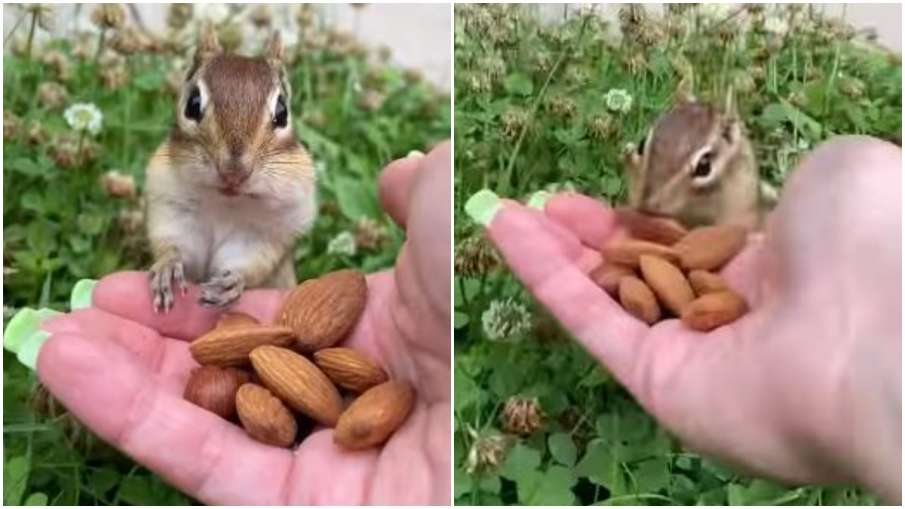 squirrel- India TV Hindi